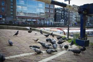 Taupen Amsterdam