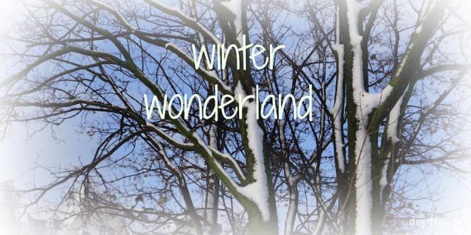 winter woderland